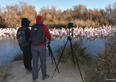 Field course in the Camargue
