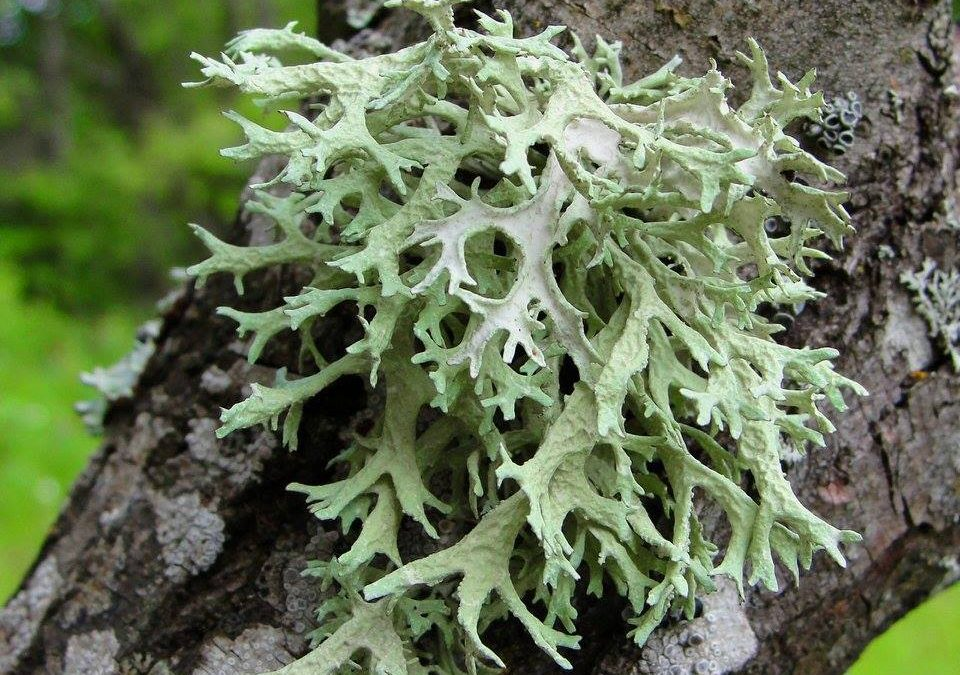 Lichens and mosses inventory